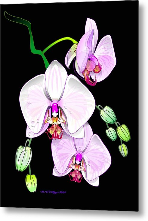 ..they Hang Together Metal Print featuring the digital art Orchids by William R Clegg