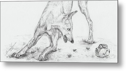 Dogs Metal Print featuring the drawing Play II by Teresa Vecere