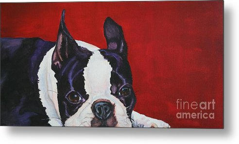 Boston Terrier Metal Print featuring the painting Red White And Black by Susan Herber