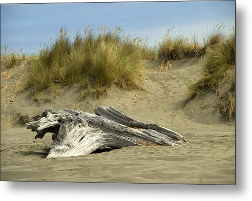 Wood Metal Print featuring the photograph Driftwood by Jessica Wakefield