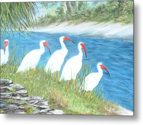 Birds Metal Print featuring the painting Ibis by Dennis Vebert