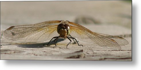 Dragonfly Metal Print featuring the photograph Dragonfly by Lori DeBruijn