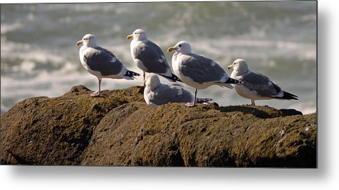 Bird Metal Print featuring the photograph Seaguls by Curtis Gibson