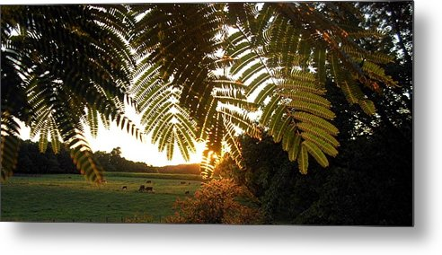 Trees Metal Print featuring the photograph Pasture At Sunrise by Caroline Urbania Naeem