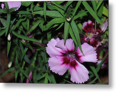 Purple Flower Metal Print featuring the photograph Purple Flower by Patrick Short