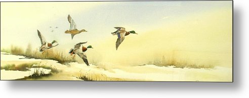 Mallard Ducks Metal Print featuring the painting Flying Over by Lynne Parker