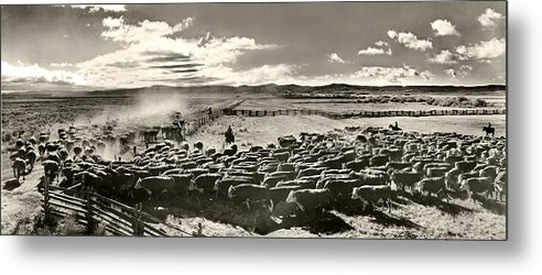 Cattle Metal Print featuring the photograph Cattle Drive by Unknown