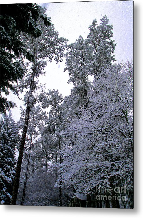 Winter Metal Print featuring the photograph Winter Surprise by Silvie Kendall