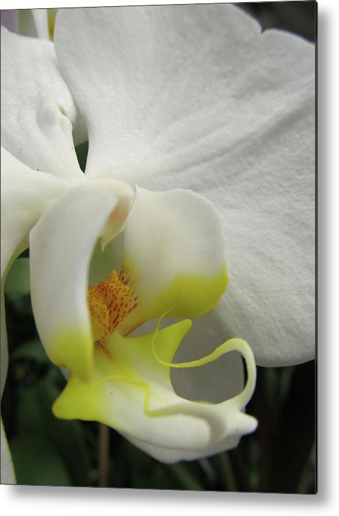 Flowers Metal Print featuring the digital art Orchid by Michele Caporaso