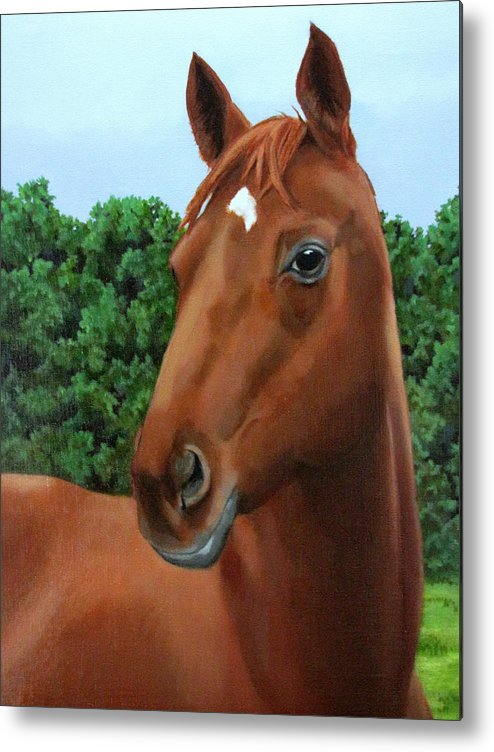 Horse Metal Print featuring the painting Retired Racer by Sandra Chase