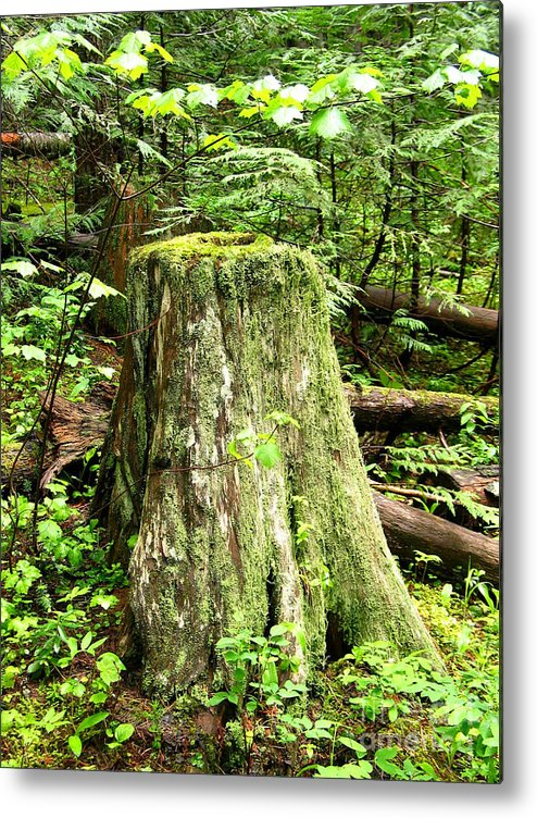 Moss Metal Print featuring the photograph Transition by Idaho Scenic Images Linda Lantzy