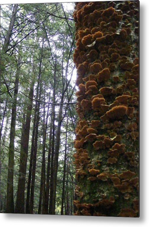 Fungus Metal Print featuring the photograph After The Rain by Alison Heckard