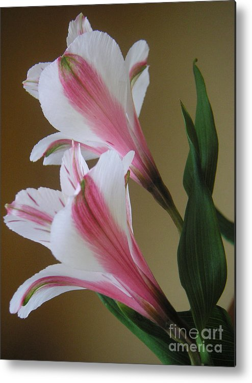 Nature Metal Print featuring the photograph Alstroemerias - Doubled by Lucyna A M Green