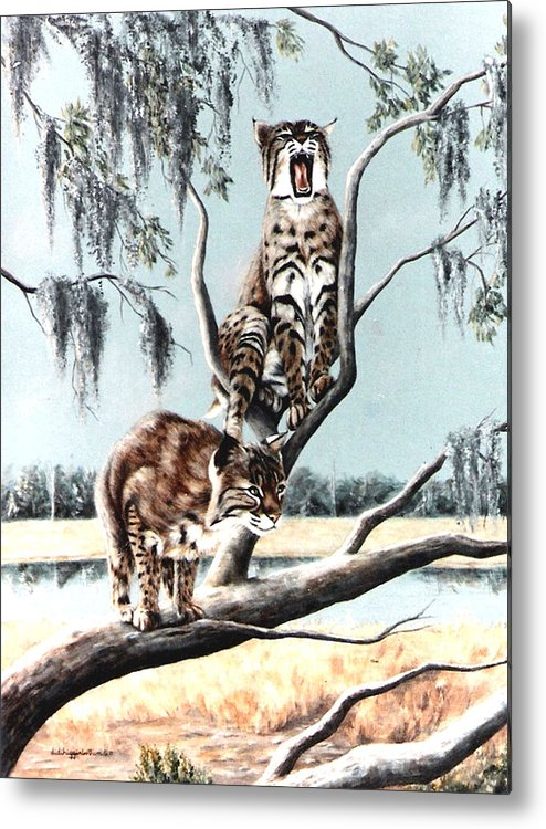 Bobcats Metal Print featuring the painting Bayou Bobcats by DiDi Higginbotham