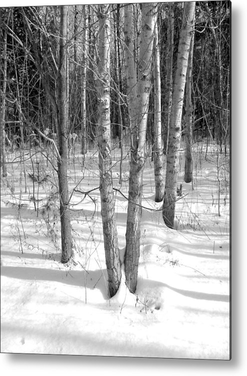 Birch Trees Metal Print featuring the photograph Birch Trees by Douglas Pike