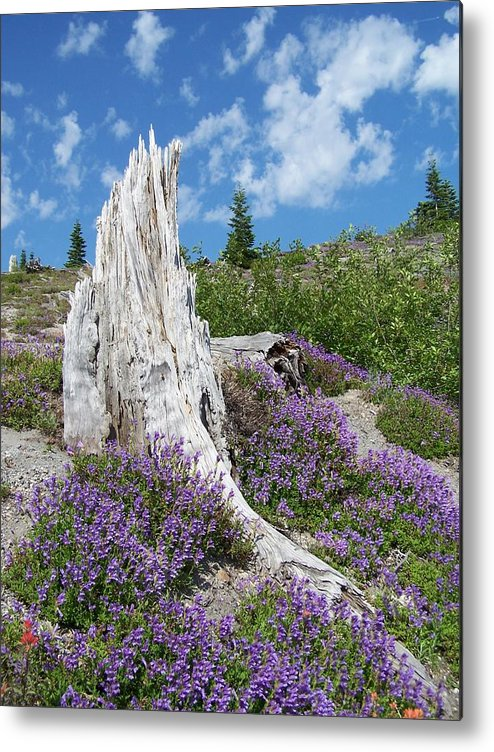 Tree Stump Metal Print featuring the photograph Blue Lupine by Gene Ritchhart