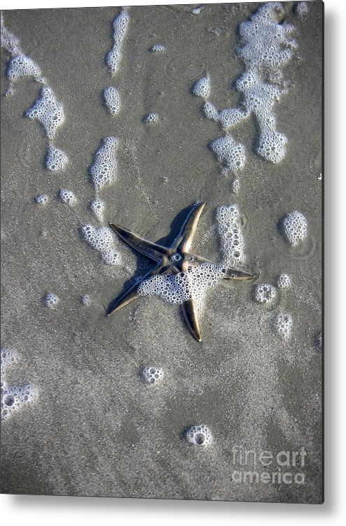 Nature Metal Print featuring the photograph Creatures Of The Gulf - A Fallen Star by Lucyna A M Green