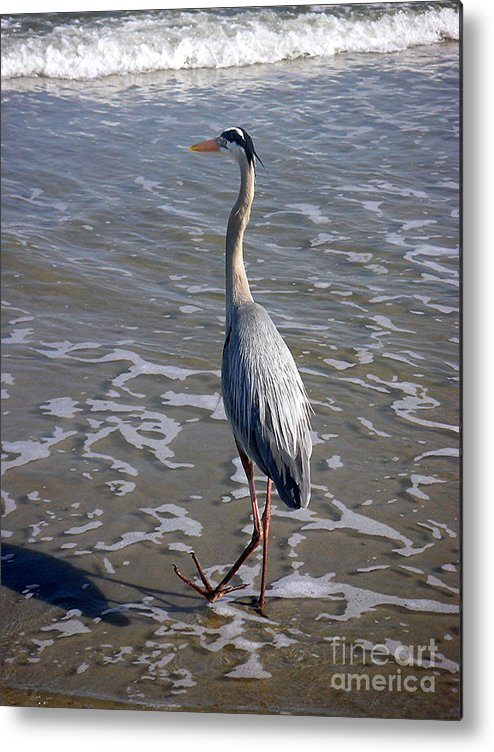 Nature Metal Print featuring the photograph Creatures Of The Gulf - Advancing Slowly by Lucyna A M Green
