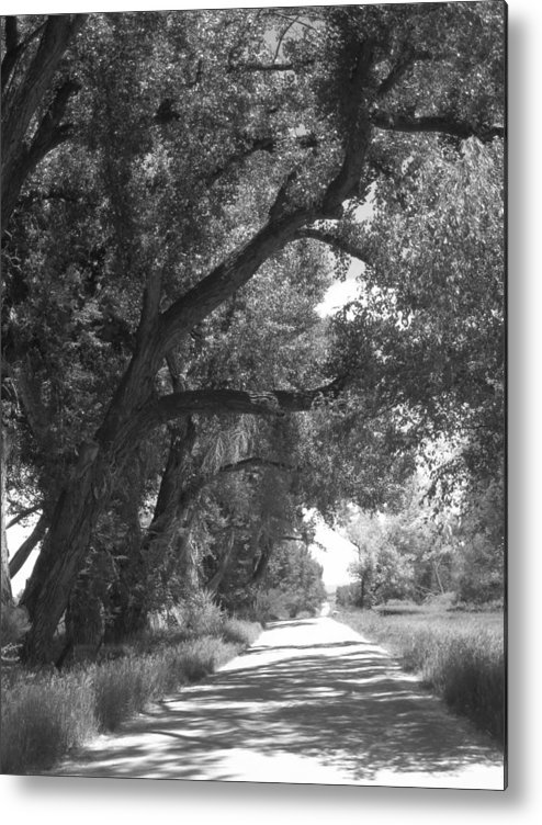 Dirt Road Metal Print featuring the photograph Down The Beaten Road by Amara Roberts