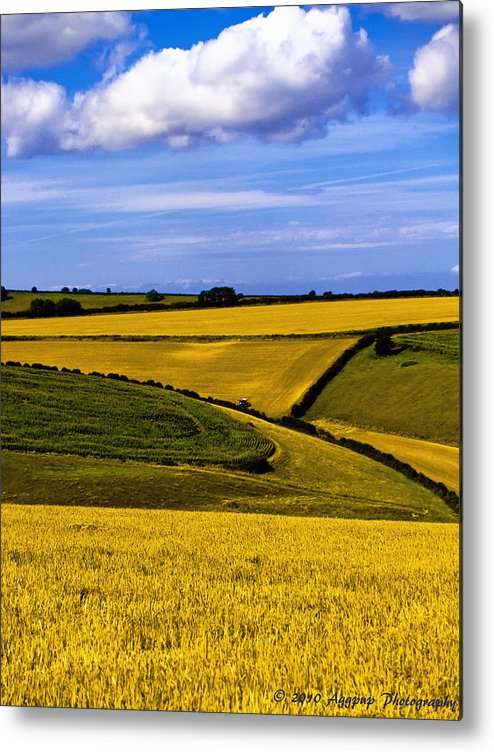 Aggpup Metal Print featuring the photograph Fields Of Gold by David J Knight