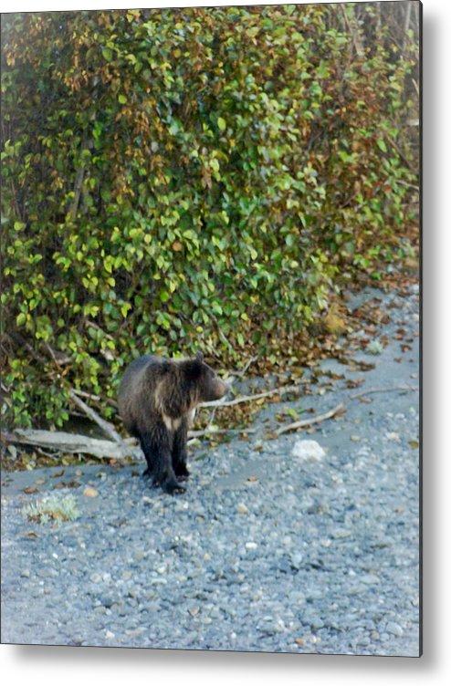 Alaska Metal Print featuring the photograph Hello Bear by Dora Miller