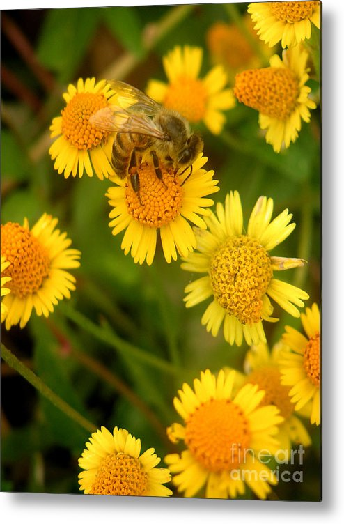 Nature Metal Print featuring the photograph Nature In The Wild - The Nectar Company by Lucyna A M Green