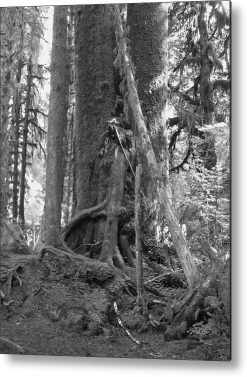 Rain Forest Metal Print featuring the photograph Olympia Rain Forest by TL Randleman