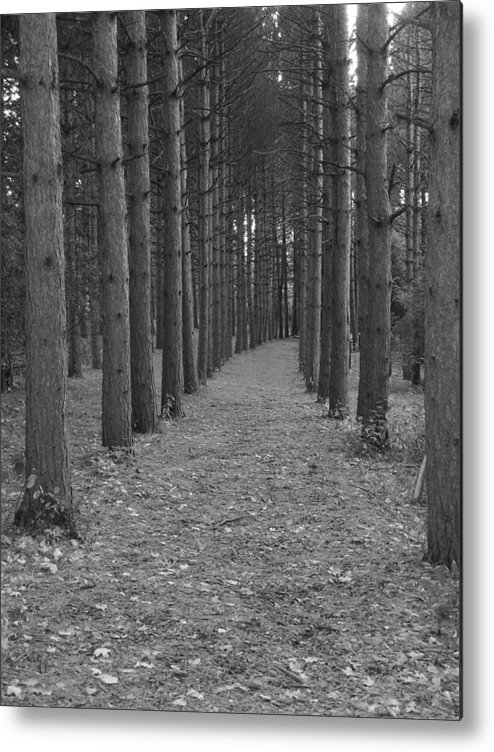 Trees Metal Print featuring the photograph Parallel Dimension by Stephanie Golden