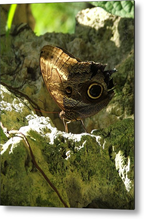 Butterfly Metal Print featuring the photograph Posing In The Light by Judy Waller