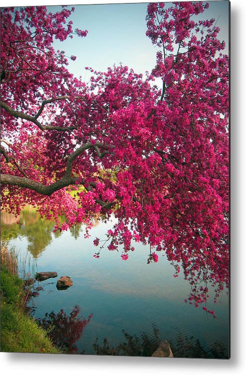 Landscape Floral With Red Crabapple Branches Metal Print featuring the digital art Red Bower by Priscilla Rink
