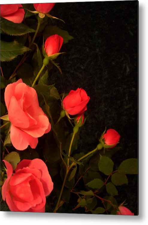 Red Roses Soddenly Appears. Metal Print featuring the photograph red by Nereida Slesarchik Cedeno Wilcoxon