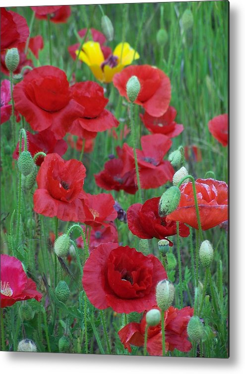 Red Poppies Metal Print featuring the photograph Red Poppies by Gene Ritchhart