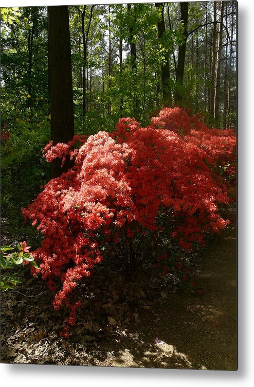 Nature Metal Print featuring the photograph Rhododendron by Attila Balazs