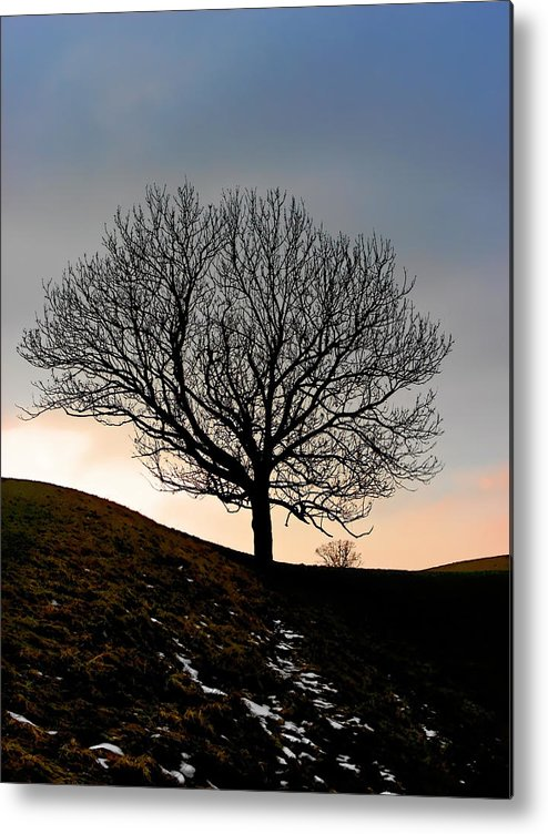 Tree Metal Print featuring the photograph Silhouette Of A Tree On A Winter Day by Christine Till
