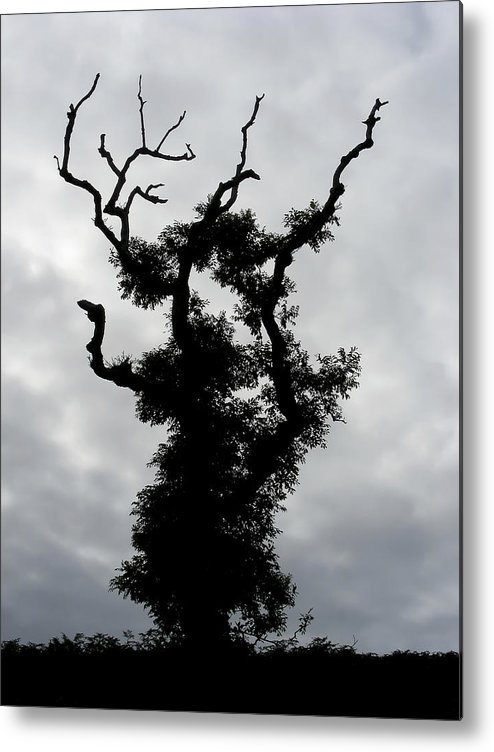 Tree Metal Print featuring the photograph Spooky Tree by Mary Lane