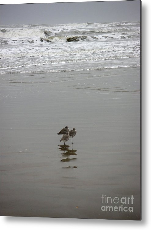 Nature Metal Print featuring the photograph The Gulf In Shades Of Gray - Three Sleepy Heads by Lucyna A M Green