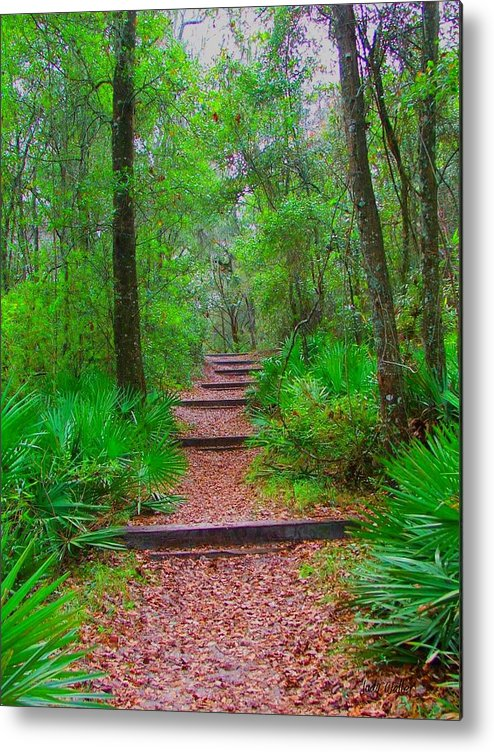 Green Metal Print featuring the photograph The Way Up by Judy Waller