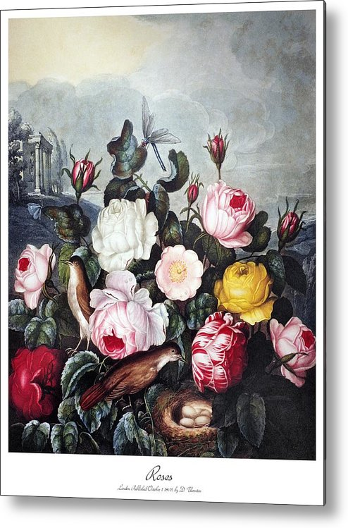 1805 Metal Print featuring the photograph Thornton: Roses by Granger