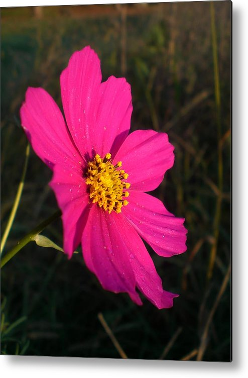 Flower Metal Print featuring the photograph Wildflower Greeting The Day by Wendy Robertson