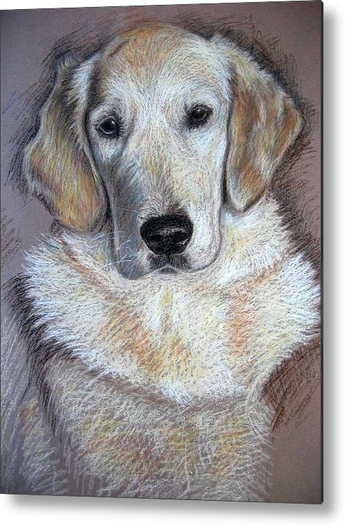 Dog Metal Print featuring the pastel Young Golden Retriever by Nicole Zeug
