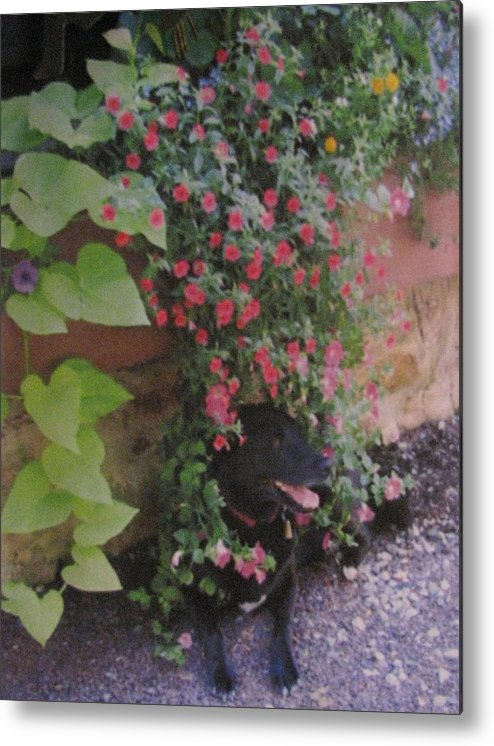 Dog Metal Print featuring the photograph Dog In Bloom by Belinda Consten