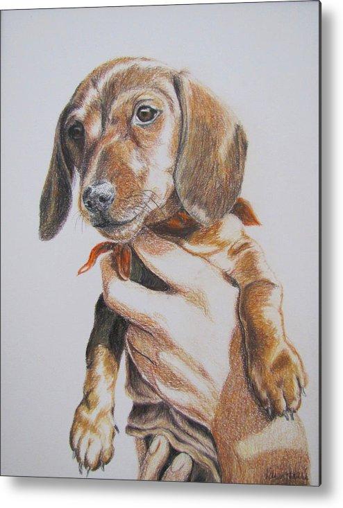 Puppy Metal Print featuring the drawing Sambo by Karen Ilari