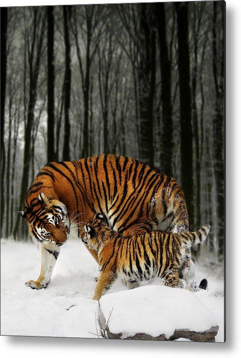 Tiger Metal Print featuring the digital art Winter Stroll by Julie L Hoddinott