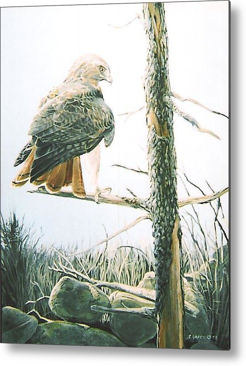 Wildlife Metal Print featuring the painting Redtail Hawk by Steve Greco