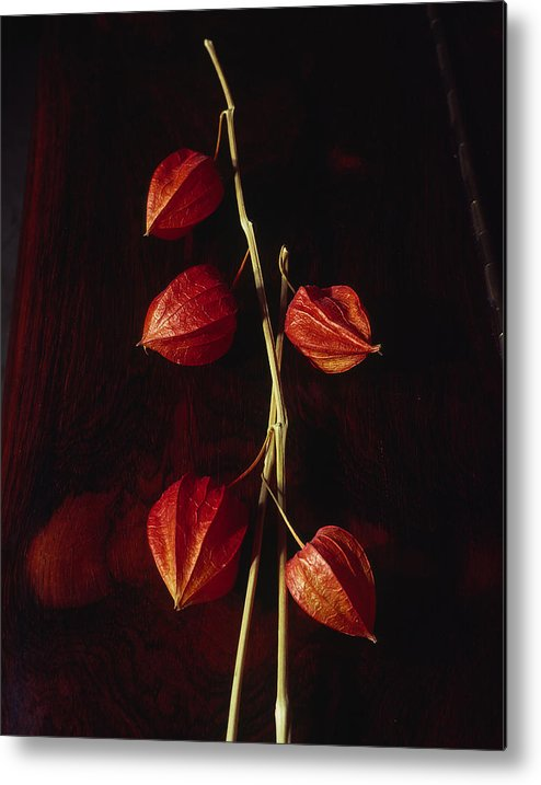 Floral Metal Print featuring the photograph Chinese Lanterns by Art Ferrier