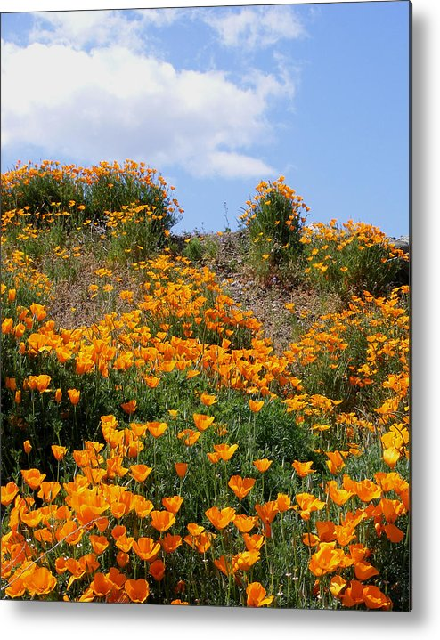 Metal Print featuring the photograph Clouds Over Poppies by Gail Salitui
