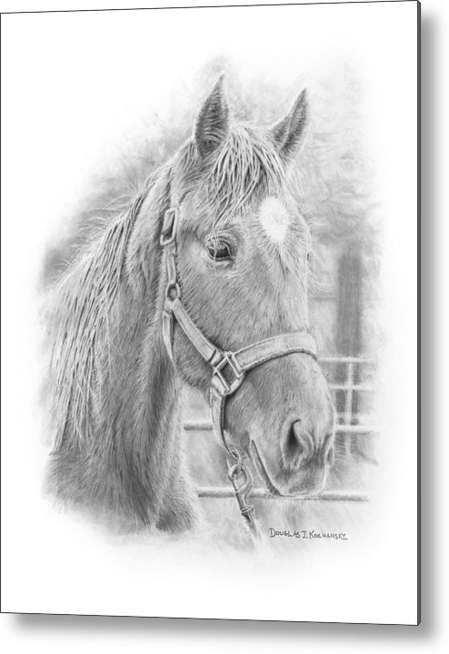 Horse Realistic Drawing Rendering Graphite Pencil Animal Western Metal Print featuring the drawing Whistler by Douglas Kochanski