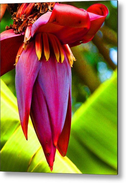 Banana Flower Metal Print featuring the photograph Banana Flower Glow by Margaret Saheed