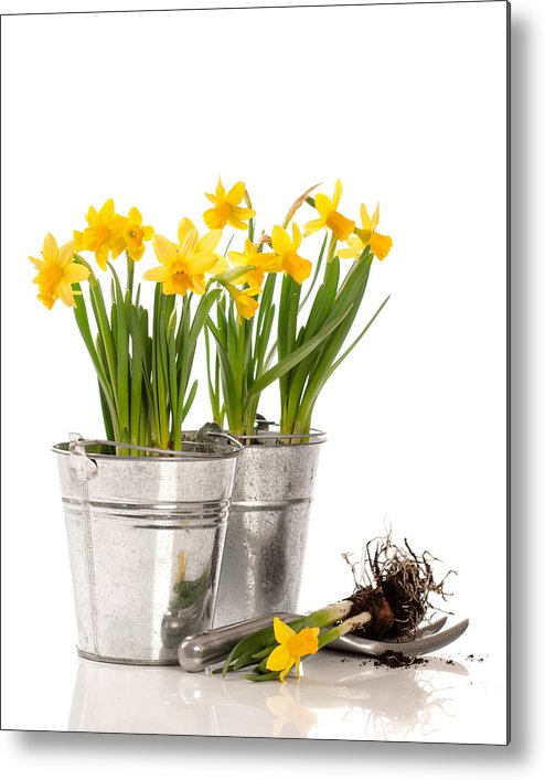 Spring Metal Print featuring the photograph Planting Bulbs by Amanda Elwell