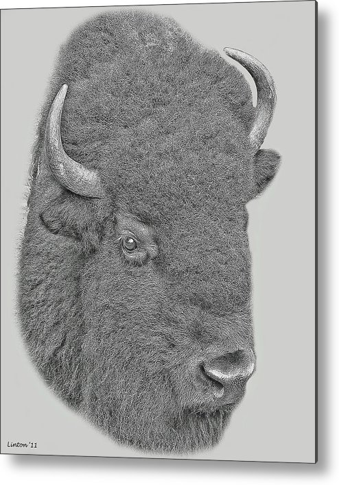 American Bison Metal Print featuring the digital art American Bison by Larry Linton